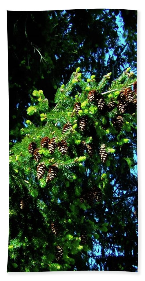Pine Bath Sheet featuring the photograph Branch Of Cones by Linda Chambers