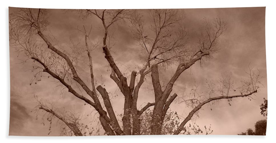 Sepia Bath Towel featuring the photograph Branches Against Sepia Sky H  by Heather Kirk