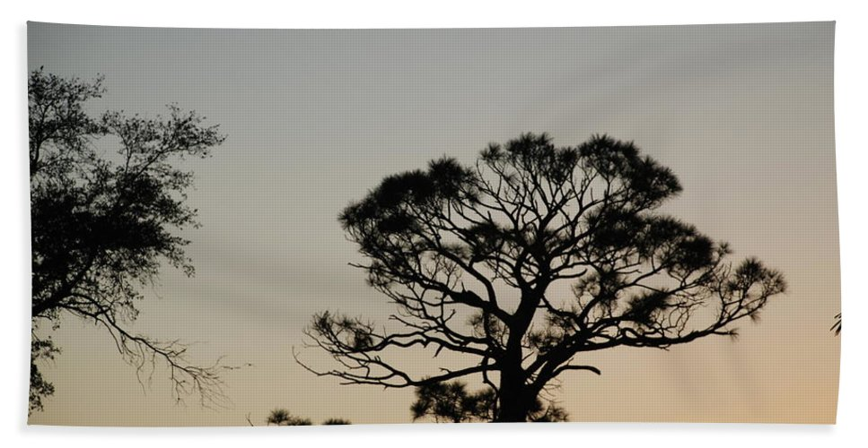 Tree Hand Towel featuring the photograph Branches In The Sunset by Rob Hans
