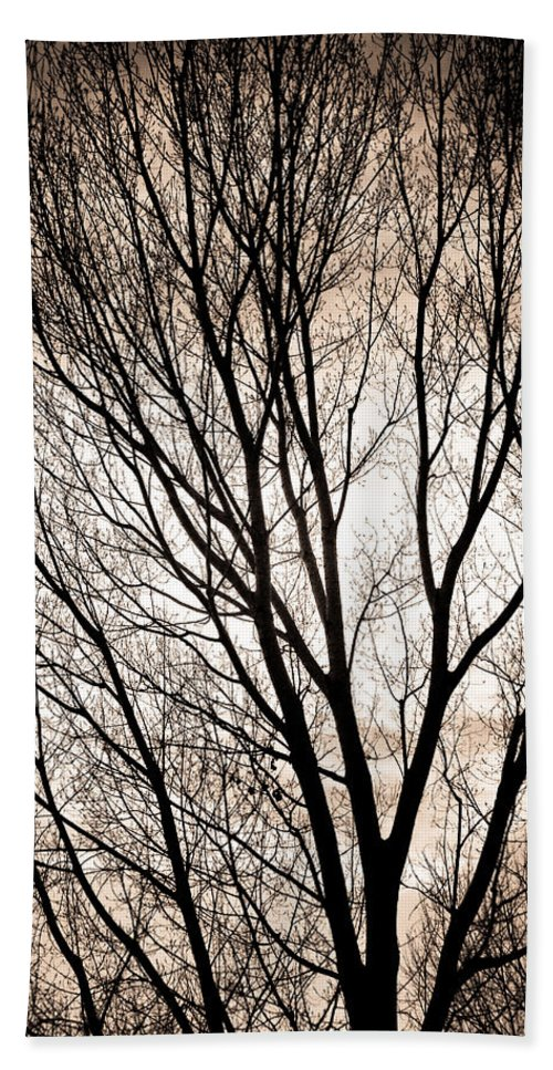 Longmont Hand Towel featuring the photograph Branches Silhouettes Mono Tone by James BO Insogna