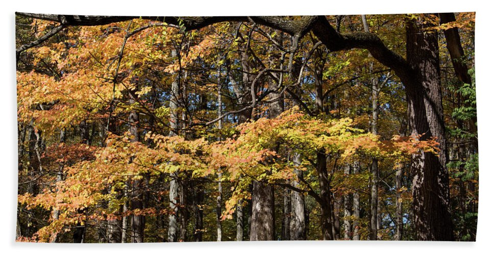 Digital Hand Towel featuring the photograph Branching Out by Jeff Roney