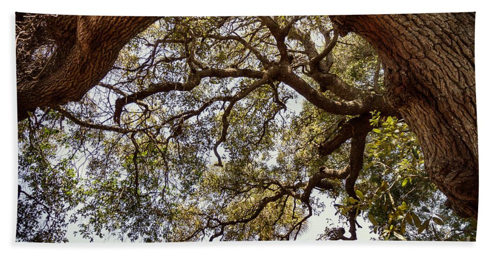 Florida Hand Towel featuring the photograph Branching Out by Todd Blanchard