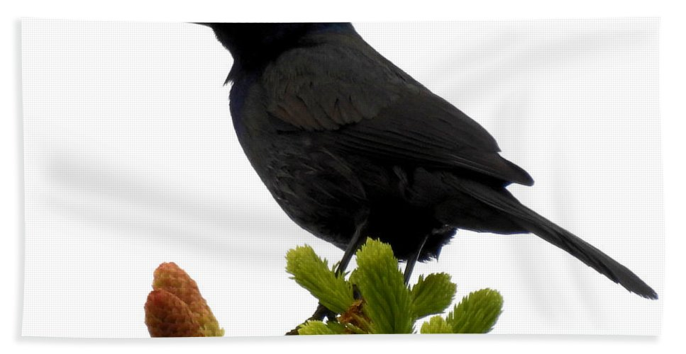 Bird Bath Sheet featuring the photograph Brewer's Blackbird by Deborah Weinhart