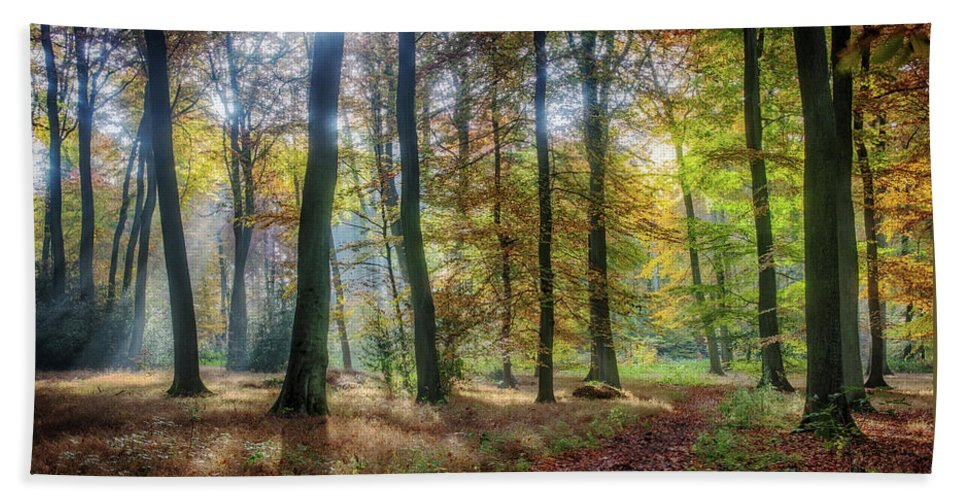 Bright Bath Sheet featuring the photograph Bright Autumn Morning by Ceri Jones