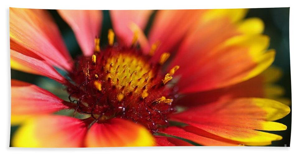 Flower Hand Towel featuring the photograph Bright Blanket Flower by Joy Watson