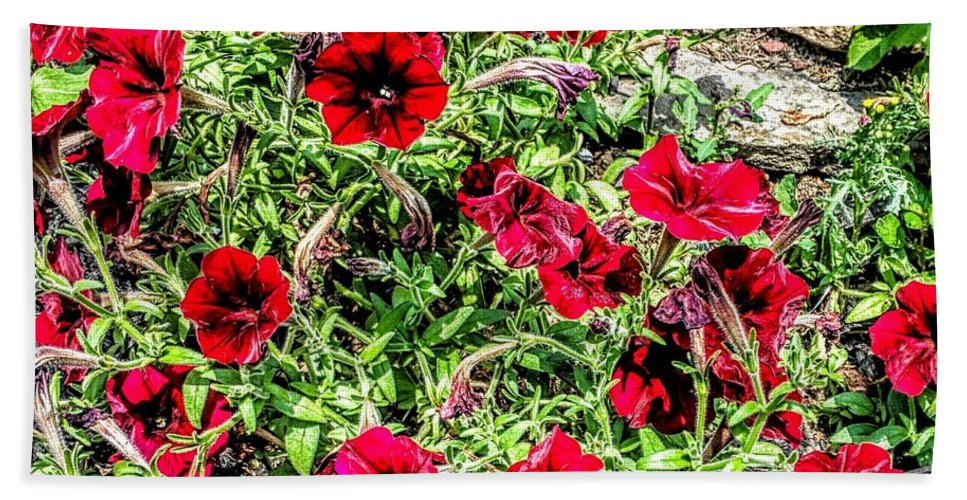 Flowers Bath Sheet featuring the photograph Bright Red by Paul Kercher