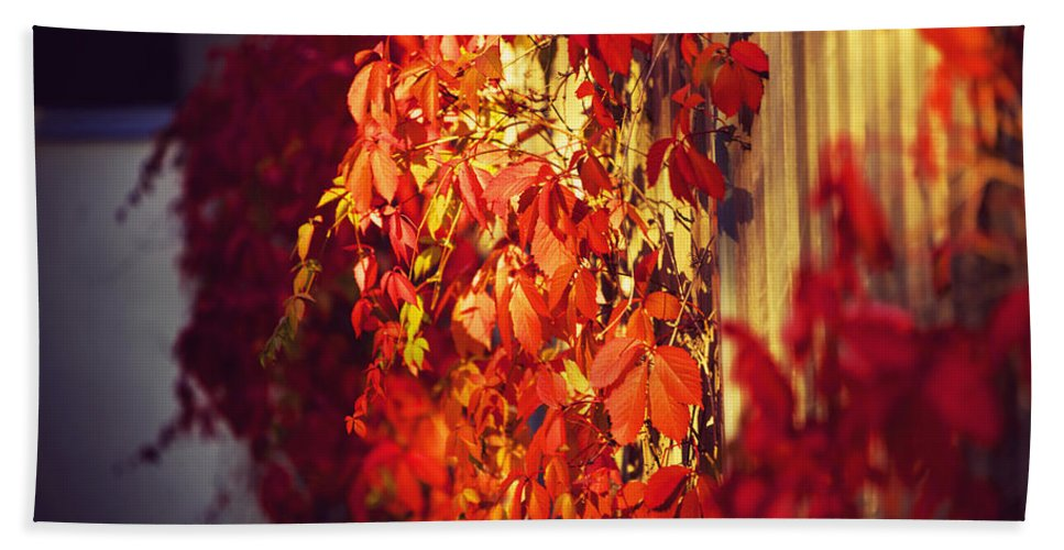 City Hand Towel featuring the photograph Bright Sunny Red Autumn Plants by Sandra Rugina
