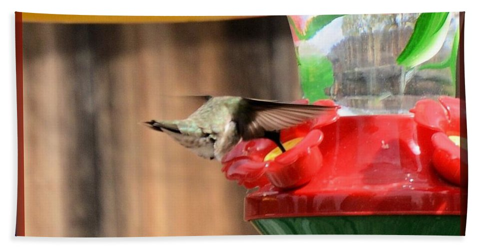 Hummingbird Hand Towel featuring the photograph Broad-tailed Hummingbird by Wendy Fox