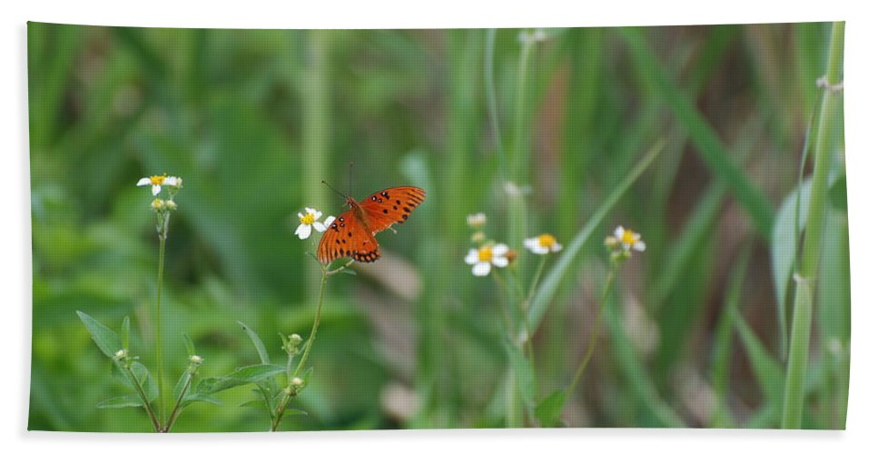 Butterfly Hand Towel featuring the photograph Broken Wing by Rob Hans