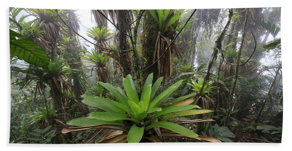 Mp Hand Towel featuring the photograph Bromeliad Bromeliaceae And Tree Fern by Cyril Ruoso
