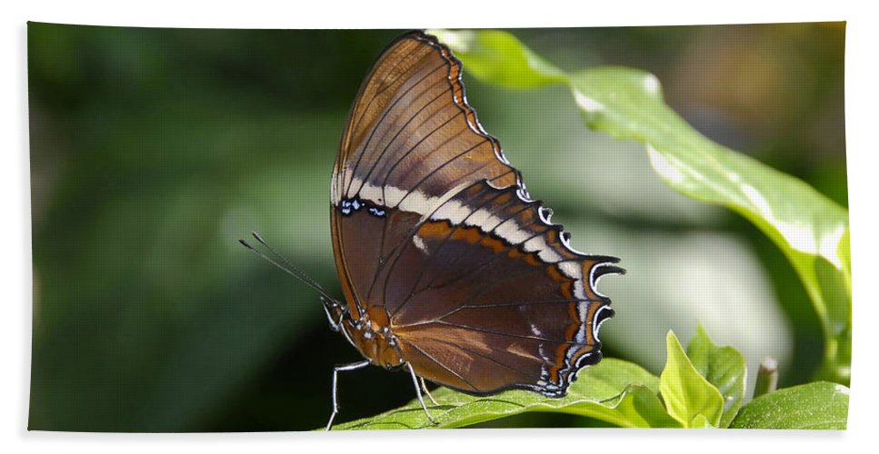 Butterfly Hand Towel featuring the photograph Brown Beauty by David Lee Thompson