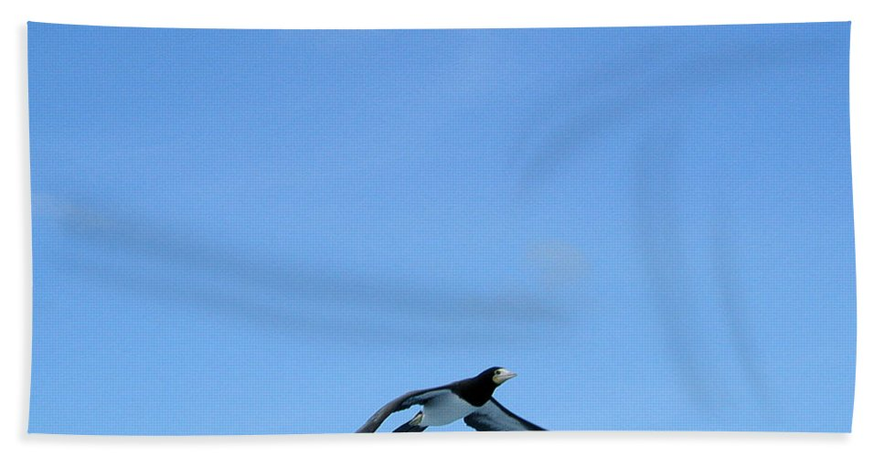 Bird Hand Towel featuring the photograph Brown Booby by Rich Bodane