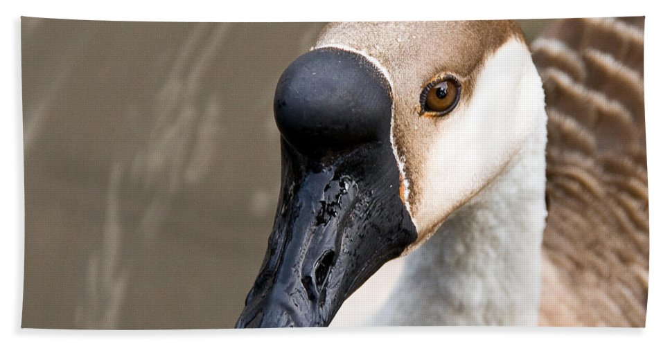 Chinese Brown Goose Bath Sheet featuring the photograph Brown Eye by Christopher Holmes