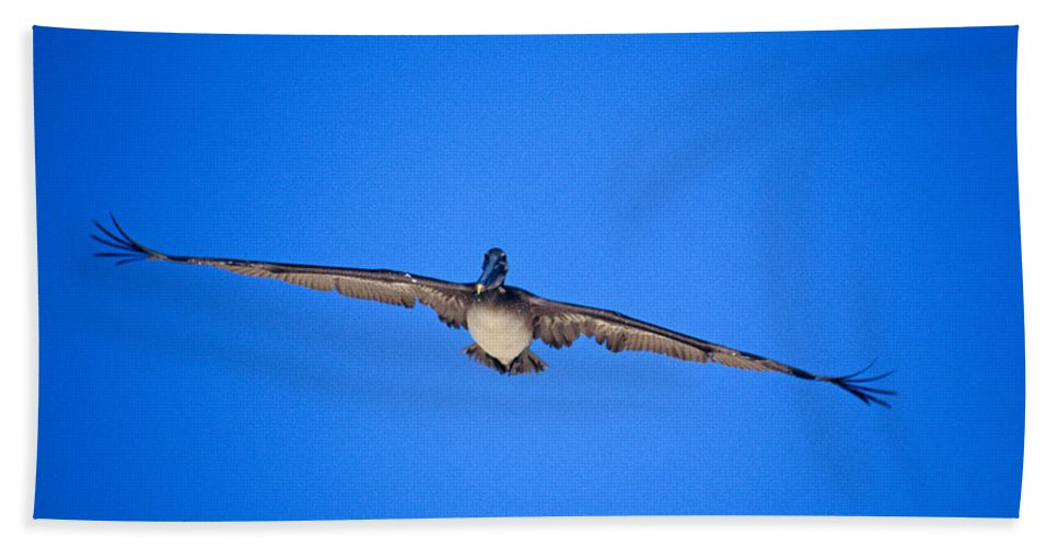 Brown Pelican Bath Sheet featuring the photograph Brown Pelican Flying by John Harmon