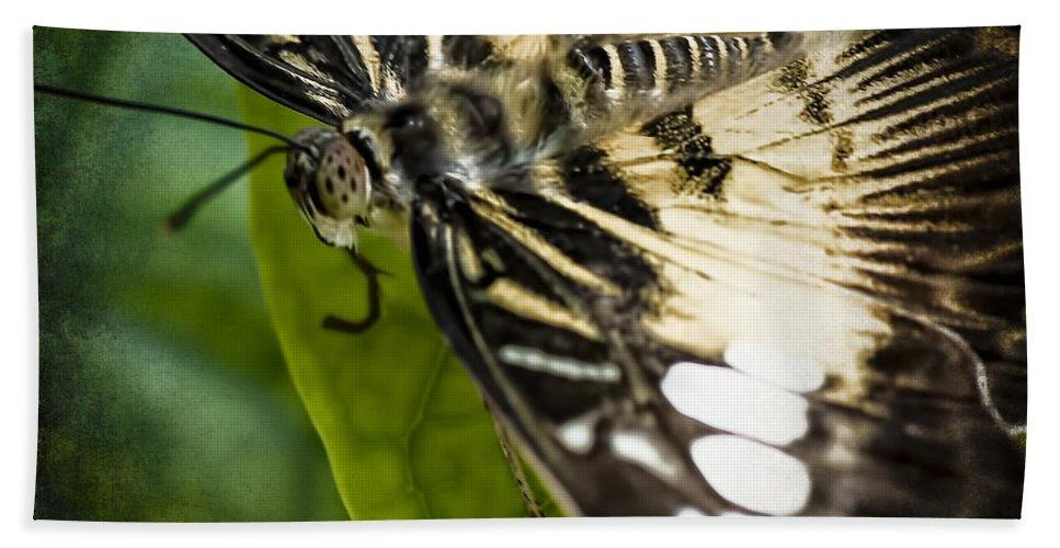 Butterflies Bath Sheet featuring the photograph Brown_clipper by Ingrid Smith-Johnsen