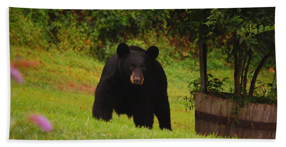 Bear Hand Towel featuring the photograph Bubba by Lori Tambakis
