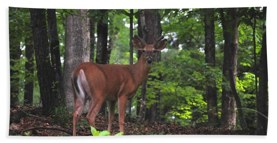 Wildlife Bath Sheet featuring the photograph Buck In Velvet by Eric Liller