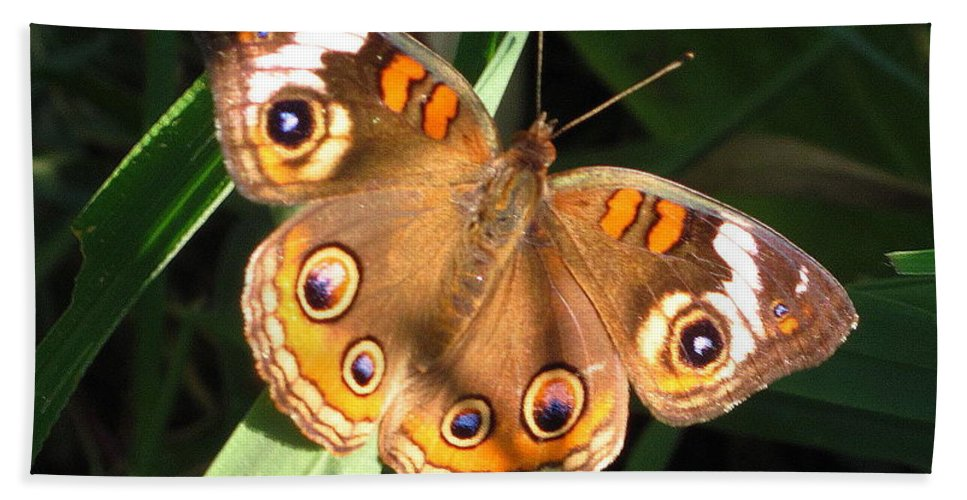 Buckeye Butterfly Images Buckeye Butterfly Prints Rare Butterfly Prints Entomology Colorful Eye Spots Maryland Butterfly Images Maryland Butterfly Prints Forest Ecology Biodiversity Conservation Nature Colorful Critter Prints Bath Sheet featuring the photograph Buckeye Butterfly by Joshua Bales