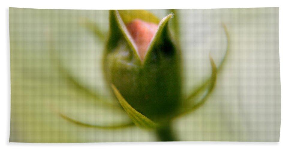Flower Bud Hand Towel featuring the photograph Bud Seeking Heaven by Vicki Ferrari