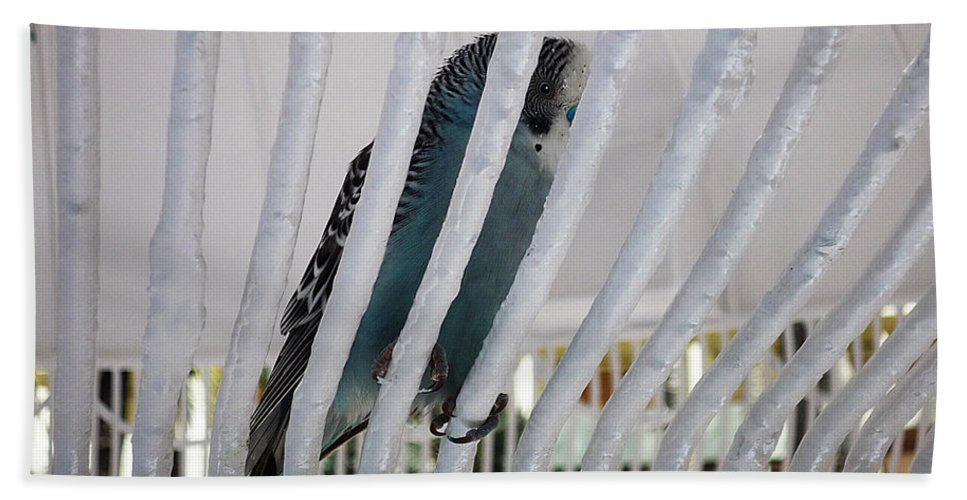 Birds Hand Towel featuring the photograph Budgerigar by Charles Stuart