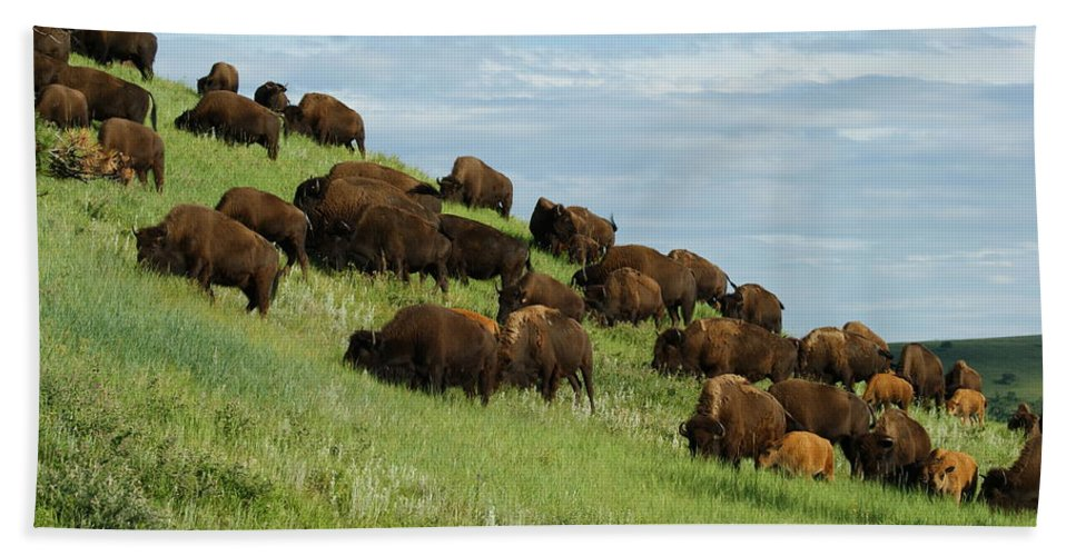 Animals Hand Towel featuring the photograph Buffalo Herd by Ernie Echols