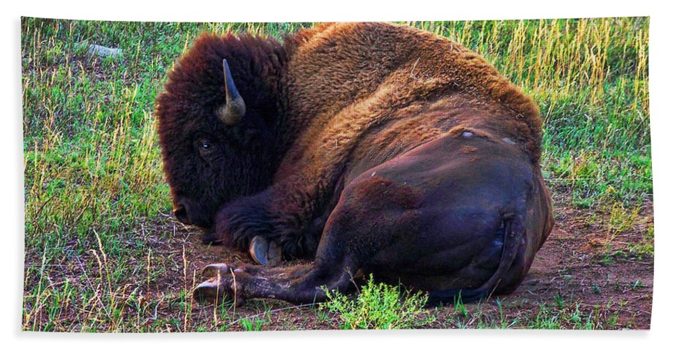 Buffalo Bath Sheet featuring the photograph Buffalo In The Badlands by Tommy Anderson