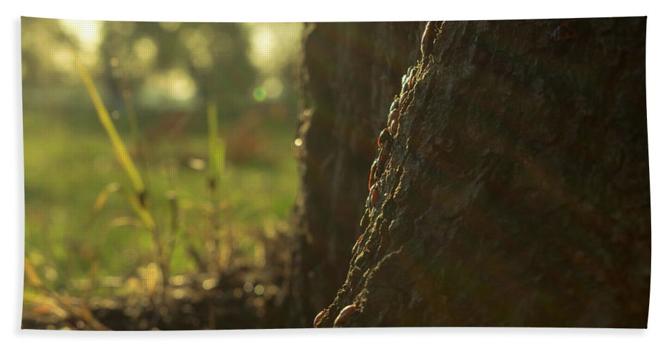 Outdoors Hand Towel featuring the photograph Bugs Life by Milos Zorzic
