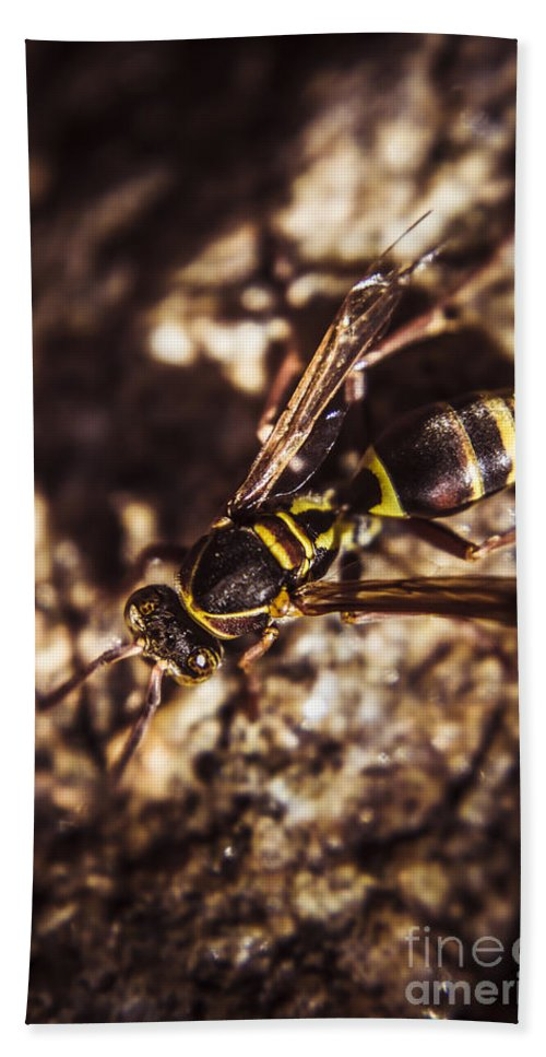Insects Hand Towel featuring the photograph Bugs Life by Jorgo Photography - Wall Art Gallery