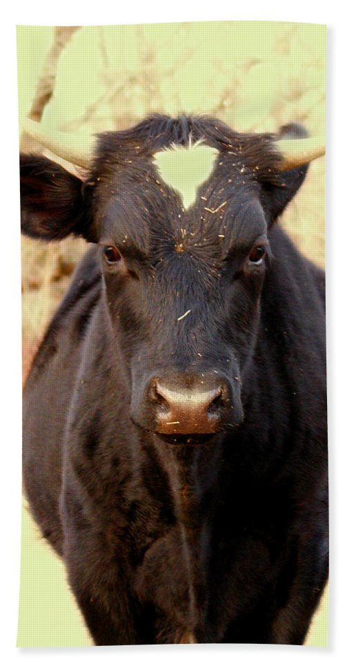 Animals Hand Towel featuring the photograph Bull by Dorothy Lee