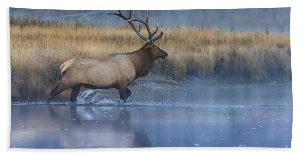 Animal Hand Towel featuring the photograph Bull Elk Crossing The Madison River by Jerry Fornarotto