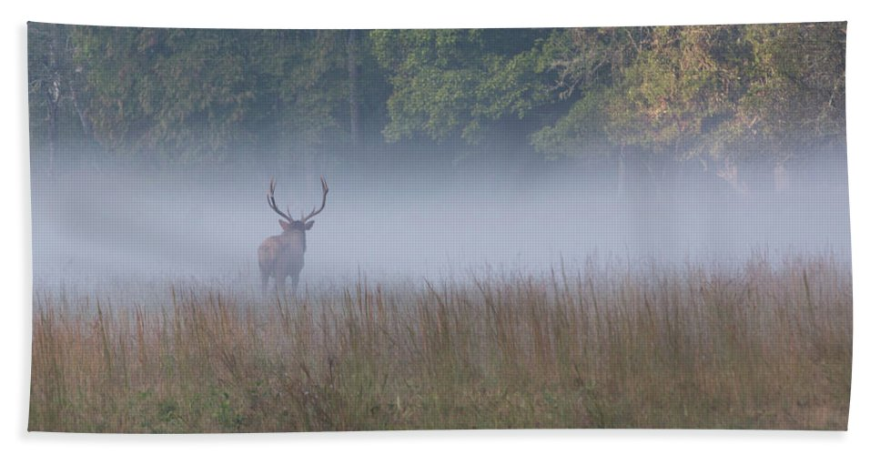 Elk Bath Towel featuring the photograph Bull Elk Disappearing In Fog - September 30 2016 by D K Wall