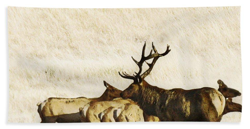 Landscape Bath Sheet featuring the photograph Bull Elk by Karen W Meyer