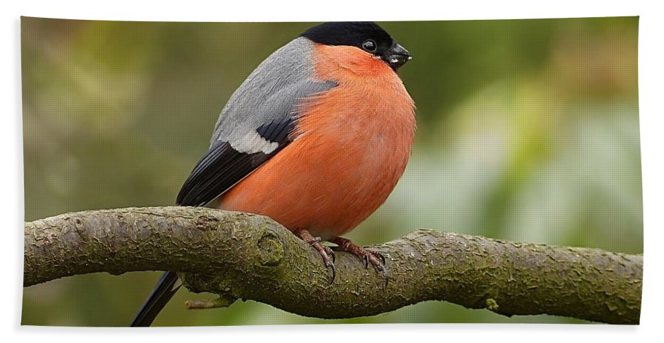 Bird Hand Towel featuring the photograph Bullfinch by FL collection
