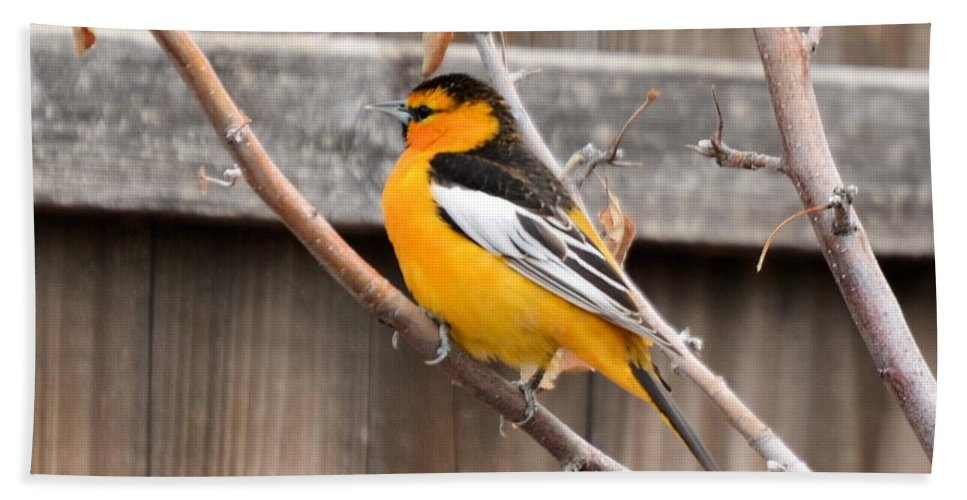 Bird Hand Towel featuring the photograph Bullock Oriole by Wendy Fox