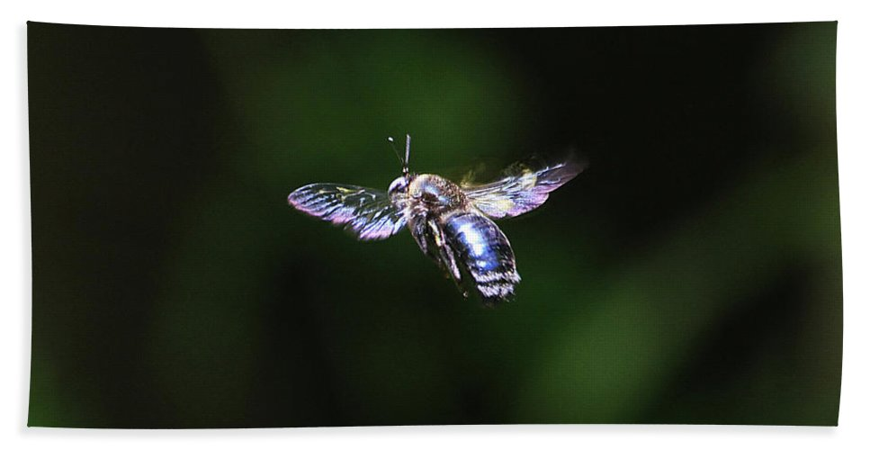 Bumble Bee Hovering Hand Towel featuring the digital art Bumble Bee Hovering by Tom Janca