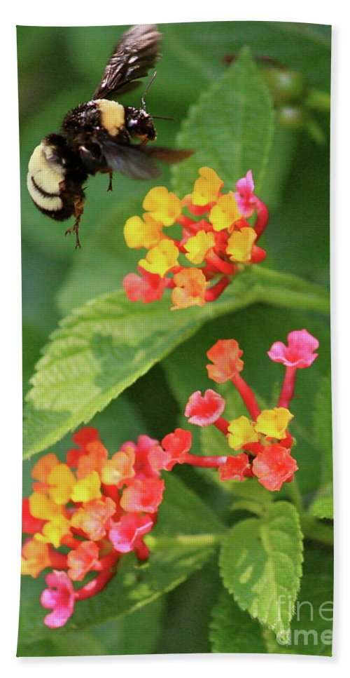 Bee Bath Sheet featuring the photograph Bumble Bee In Flight by Carol Groenen