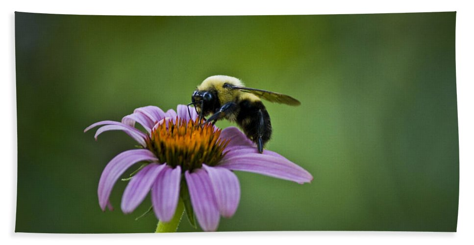 Bumblebee Hand Towel featuring the photograph Bumblebee by Teresa Mucha