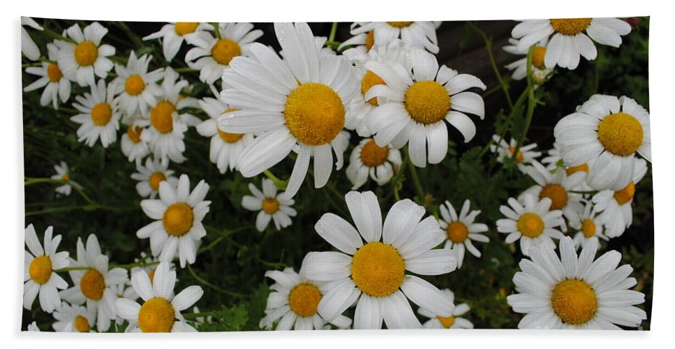 Daisy Bath Sheet featuring the photograph Bunch Of Daisy by Jost Houk
