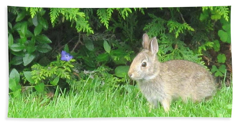 Rabbit Hand Towel featuring the photograph Bunny In Repose by Ian MacDonald