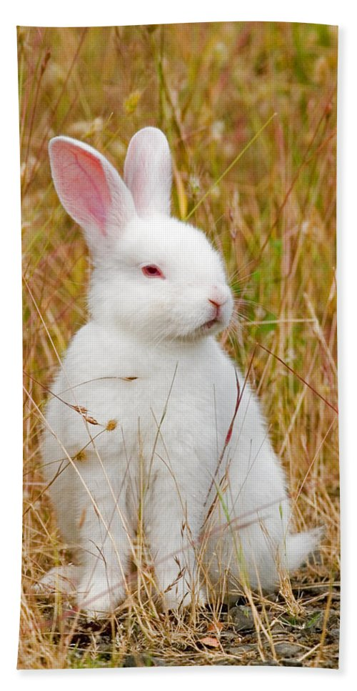 Rabbit Hand Towel featuring the photograph Bunny by Randall Ingalls