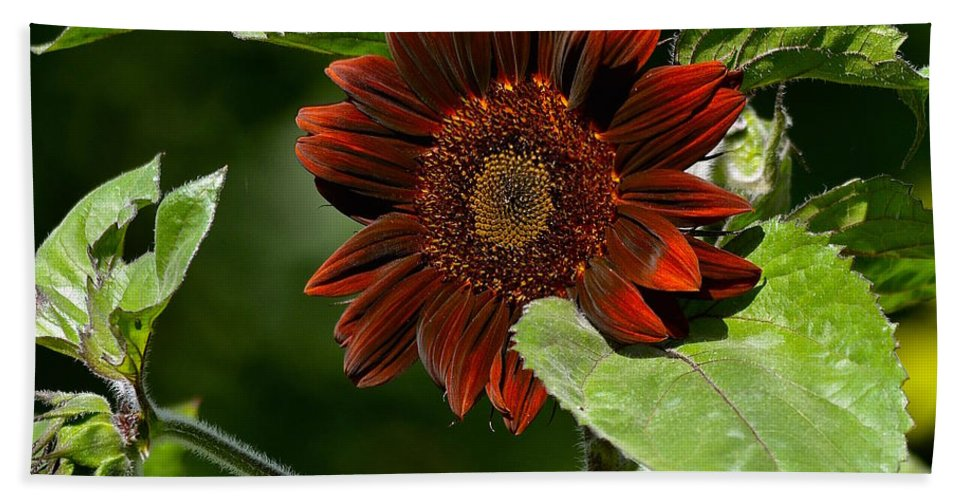Sunflower Bath Sheet featuring the photograph Burgundy Red Sunflower by Lisa Telquist