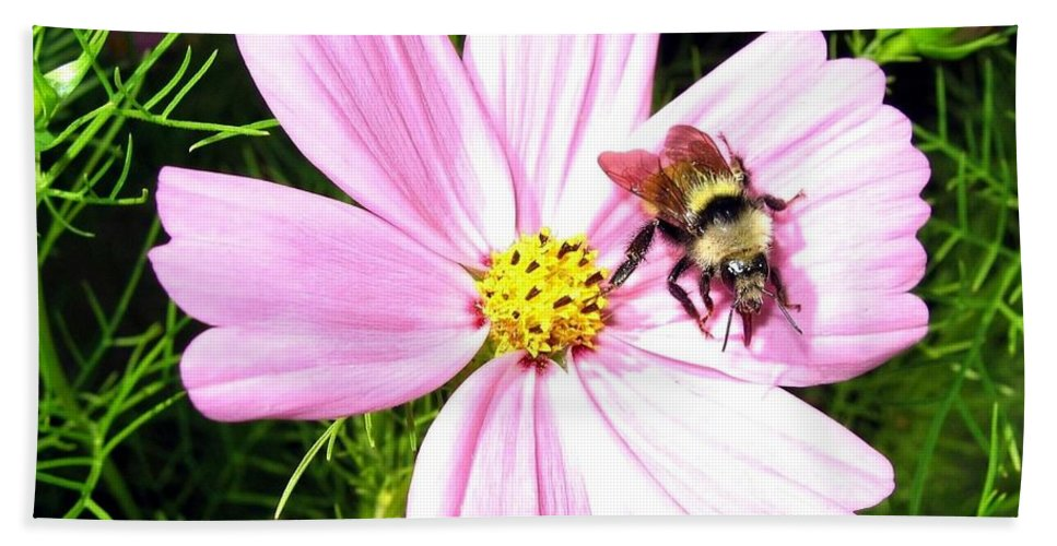 Bee Hand Towel featuring the photograph Busy Bee by Will Borden
