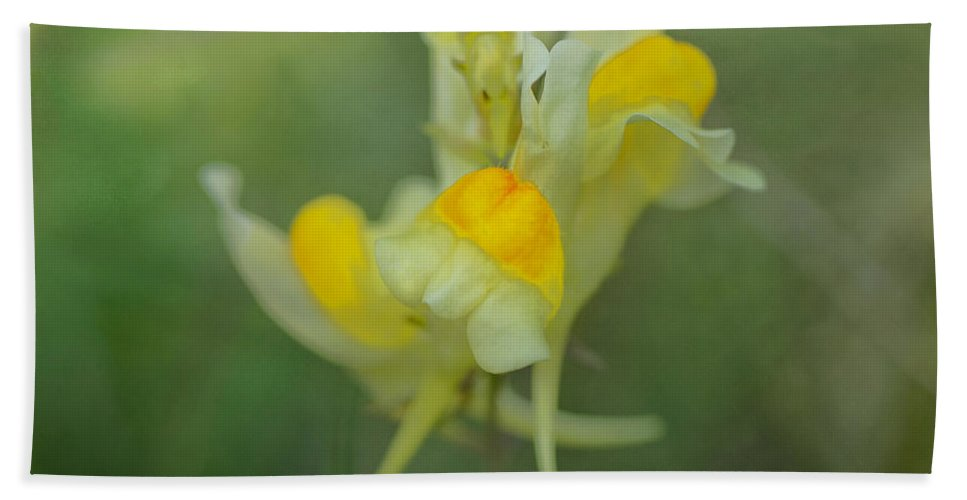Wildflowers Hand Towel featuring the photograph Butter And Eggs by Susan Capuano