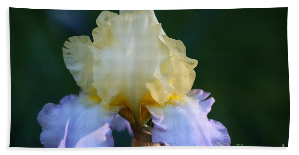 Flower Hand Towel featuring the photograph Buttered Blueberry by Susan Herber