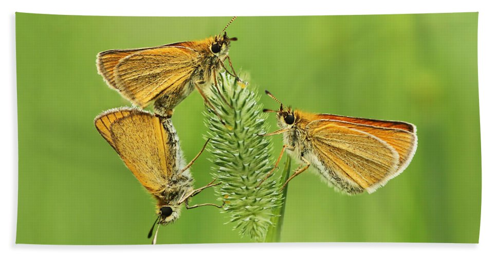 Delaware Bath Sheet featuring the photograph Butterflies by Mircea Costina Photography