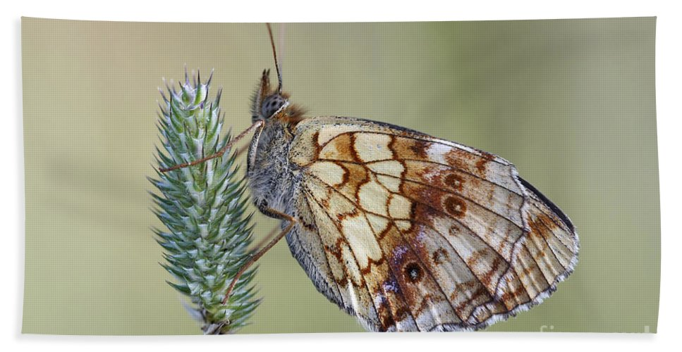 Macro Bath Sheet featuring the photograph Butterfly - Meadow Satyrid by Michal Boubin