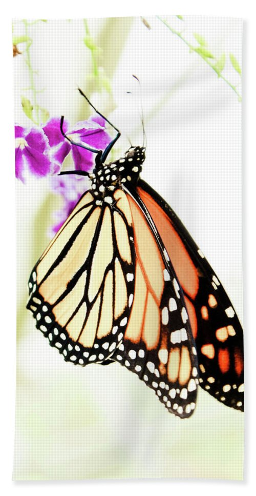 Butterfly Bath Sheet featuring the photograph Butterfly 01 by Lisa Sciandra