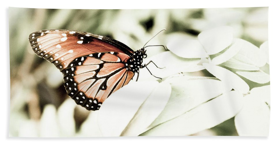 Butterfly Bath Sheet featuring the photograph Butterfly 05 by Lisa Sciandra