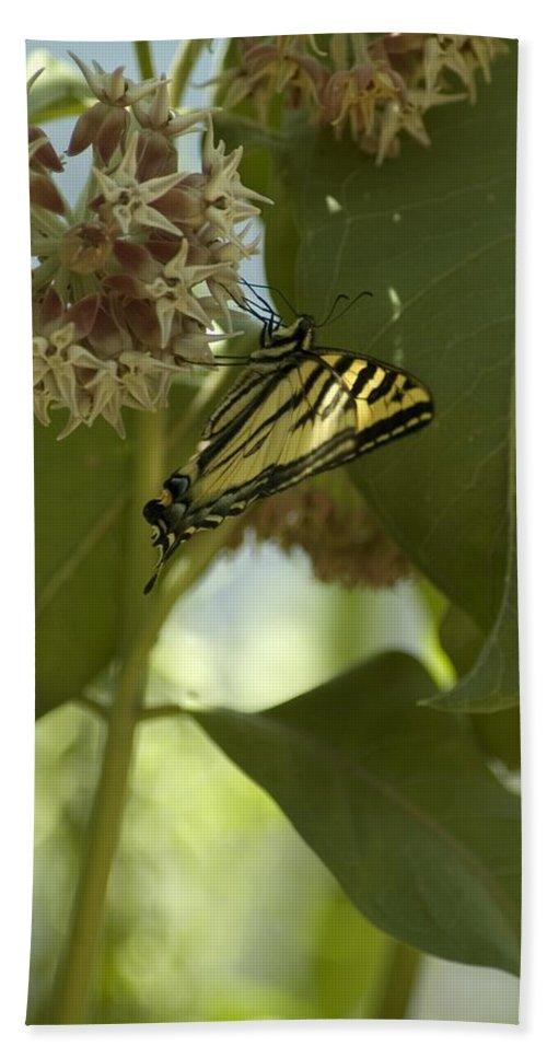Flower Bath Sheet featuring the photograph Butterfly 1 by Sara Stevenson