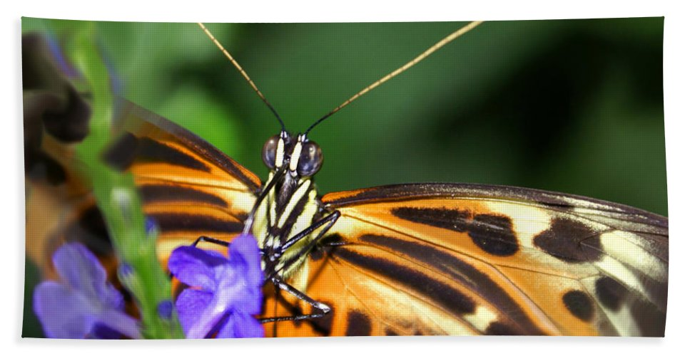Butterfly Hand Towel featuring the photograph Butterfly 2 Eucides Isabella by Heather Coen